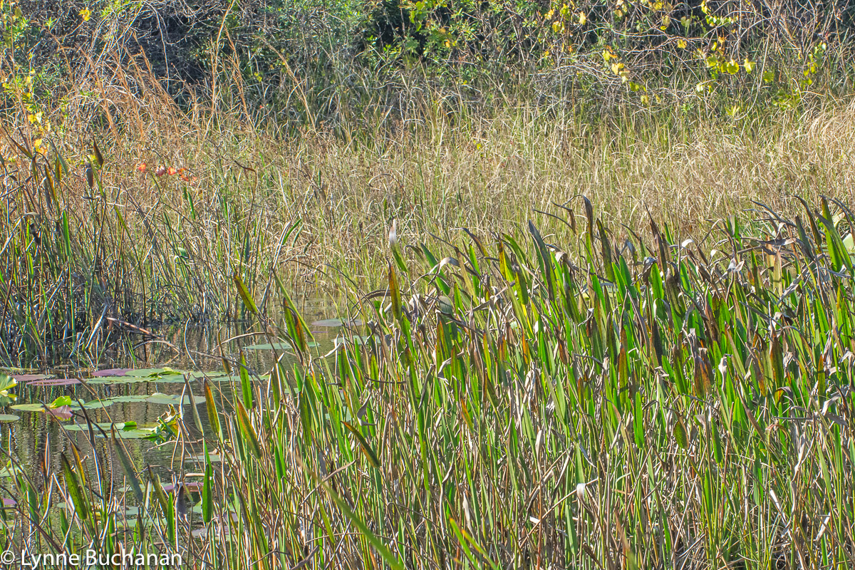 Layers of Vegetation, Lake Louisa State Park