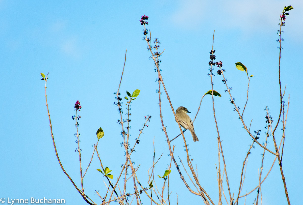 Bird in Repose