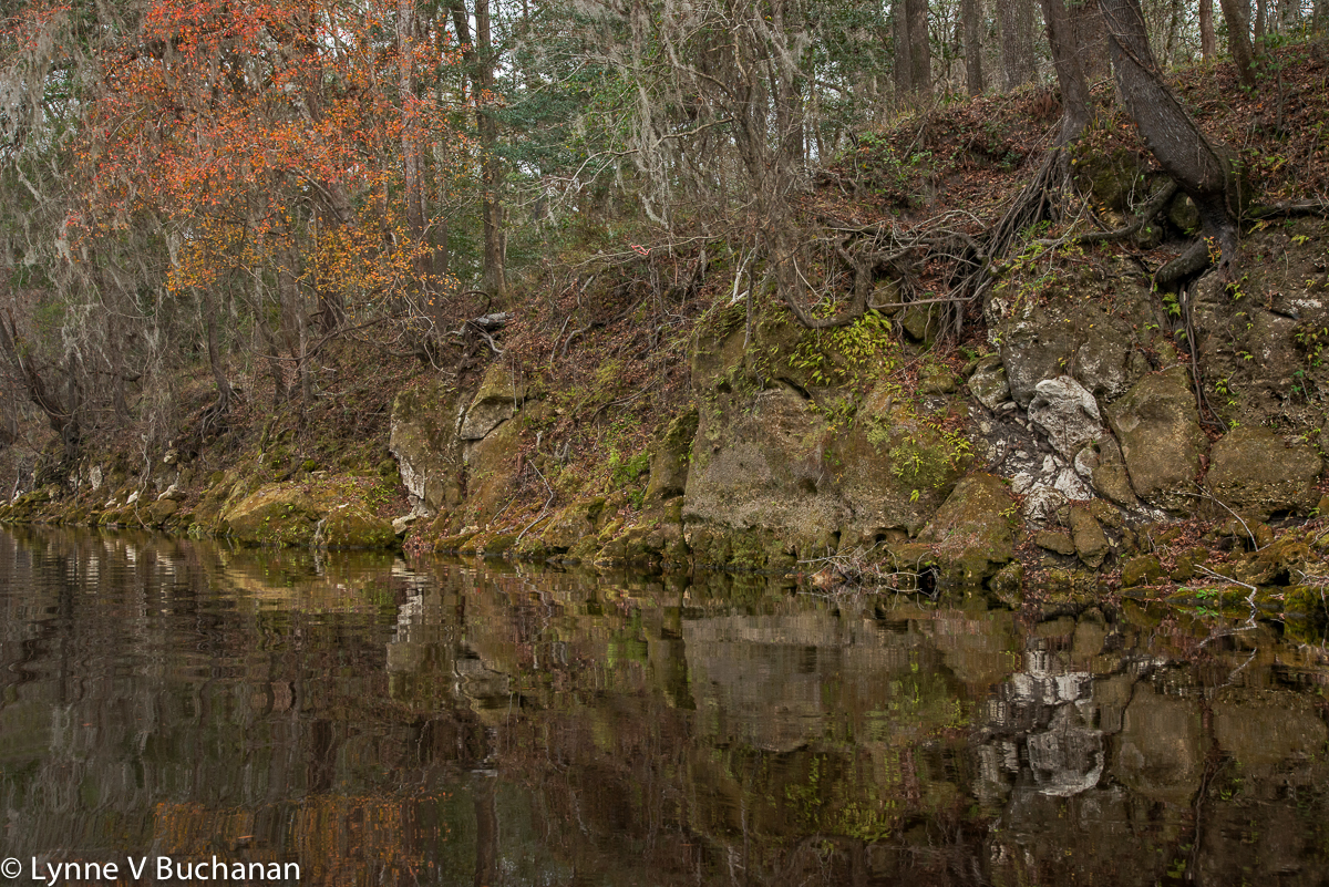 Last of the Fall Color on the Suwnanee River as the Sabal Trail Pipeline is Pushed-Pulled Through