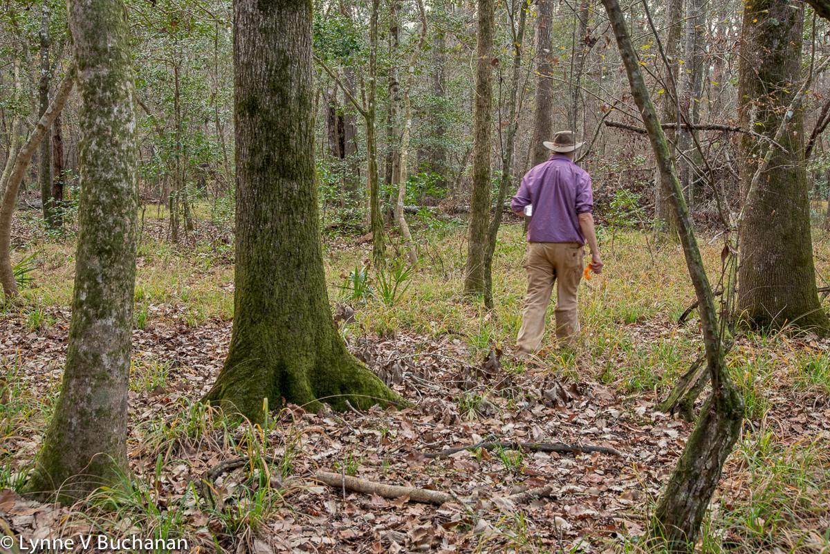 John Quarterman Walking Through the Woods