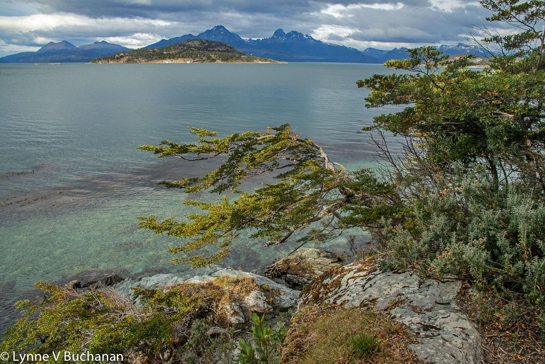 Tierra del Fuego Lake with Trees