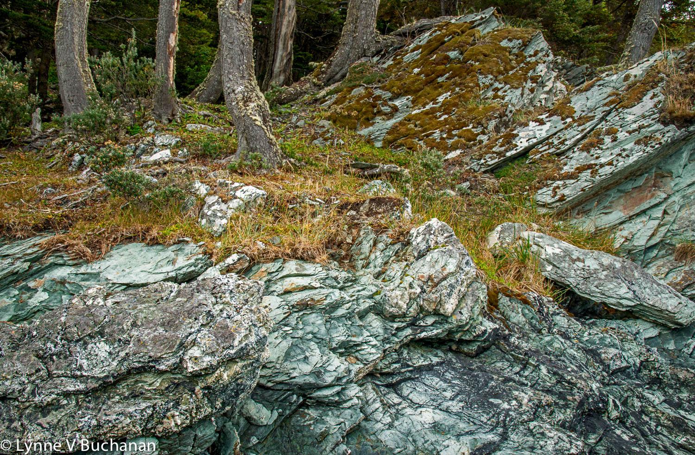 Schist, Lava and Trunks, Tierra del Fuego
