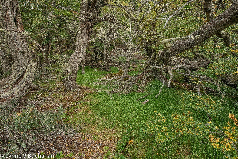 Growing at Impossibly Odd Angles, Tierra del Fuego