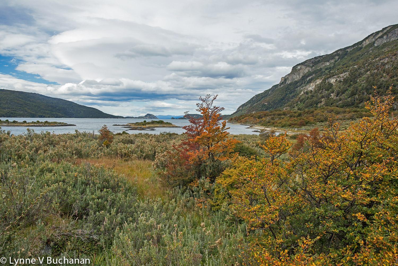 Fall Color, Tierra del Fuego