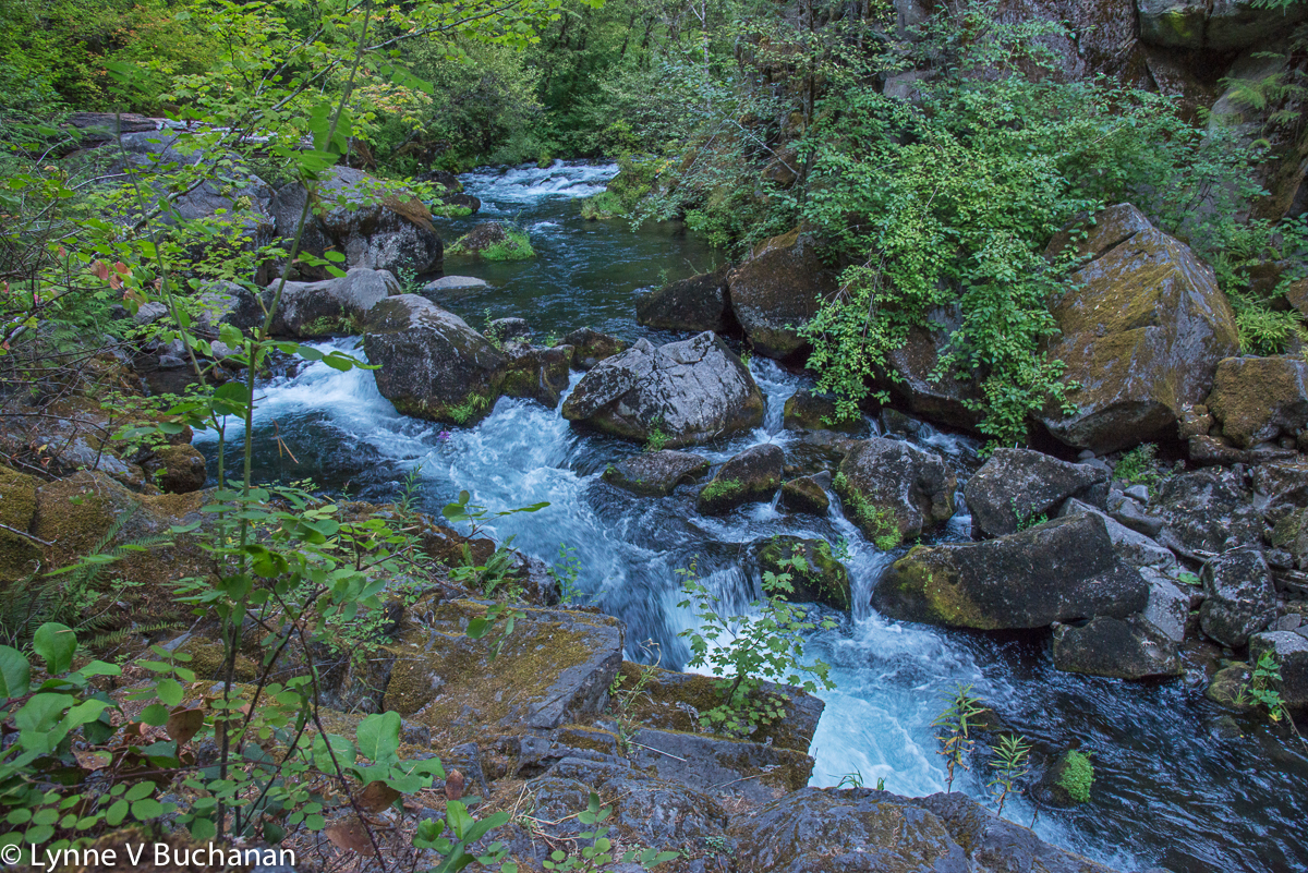 Stream Before Tokee Falls