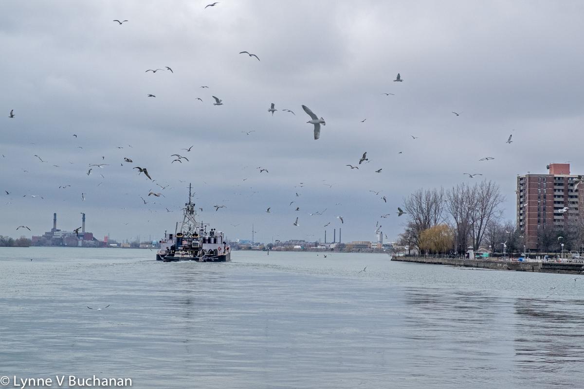 Birds Flying Over a Cargo Ship, Niagara River