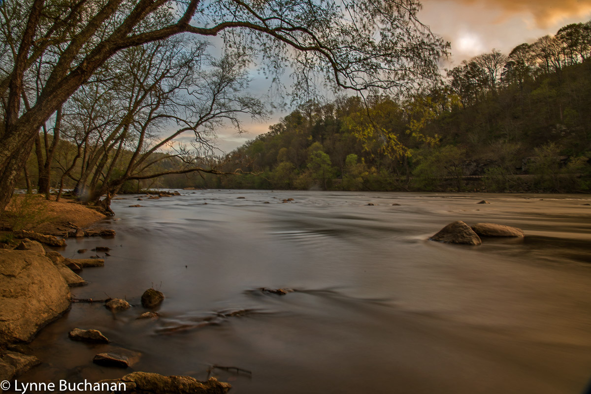 Sunset on the French Broad, Trees Bend Gently Over the Passing Water