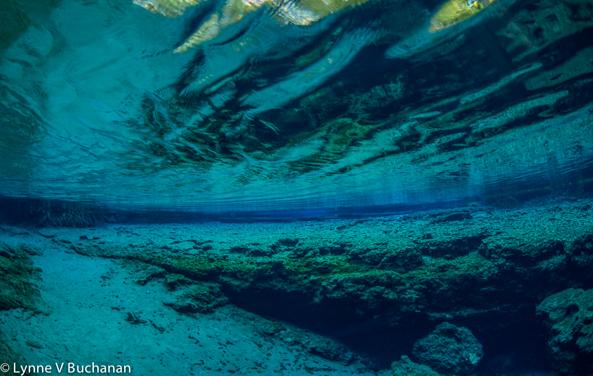 Diagonal Reflections Mirror the Crevice in Ginnie Springs