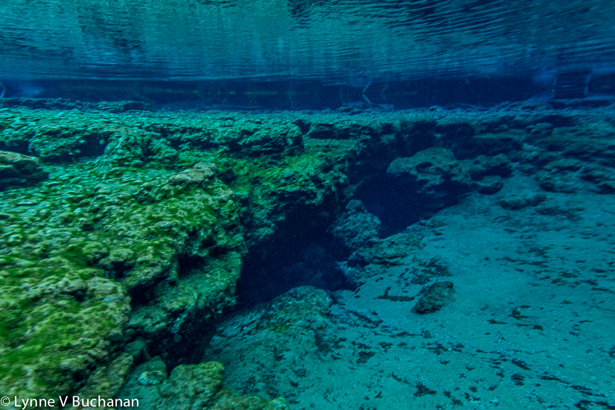 Ginnie Springs Headspring