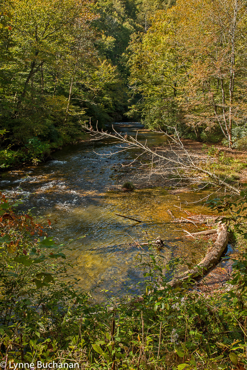 The Davidson River in the Pisgah National Forest