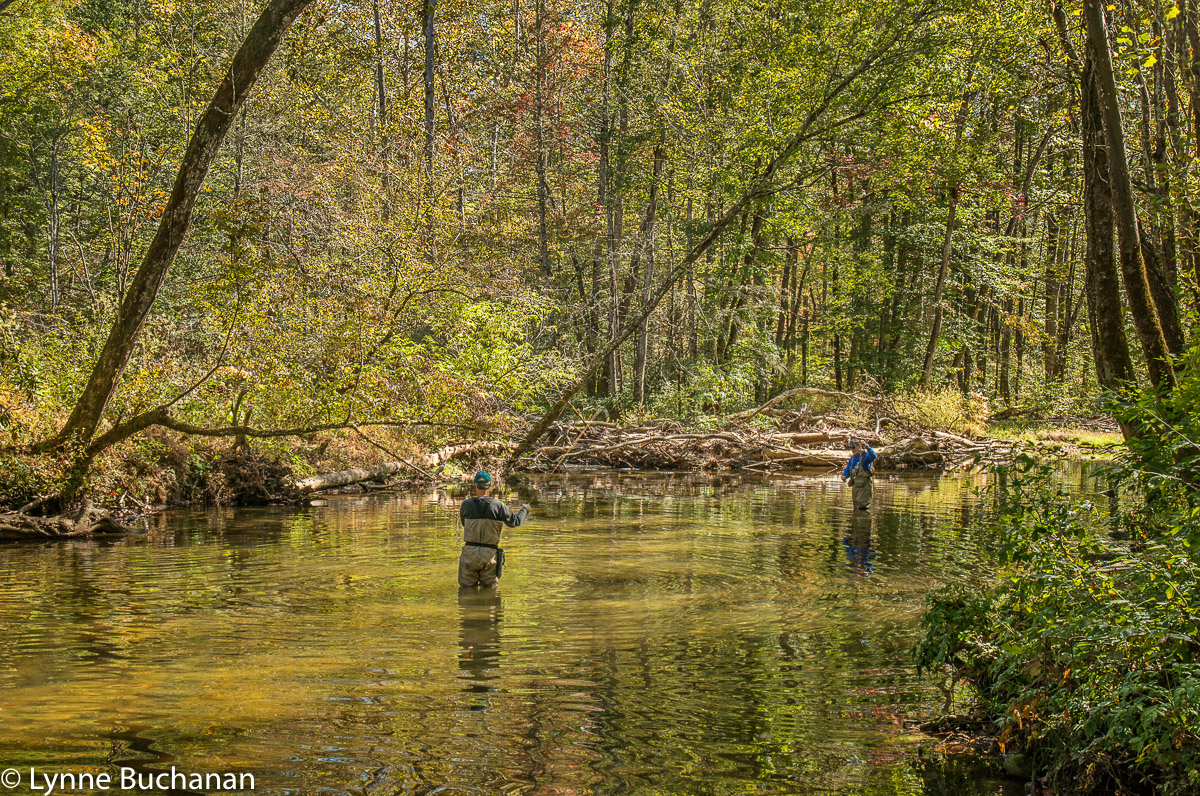 Fly Fishing on the Davidson River