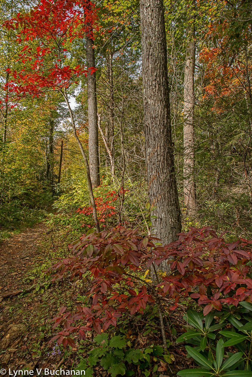 Shope Creek Pisgah Forest Trail in Autumn