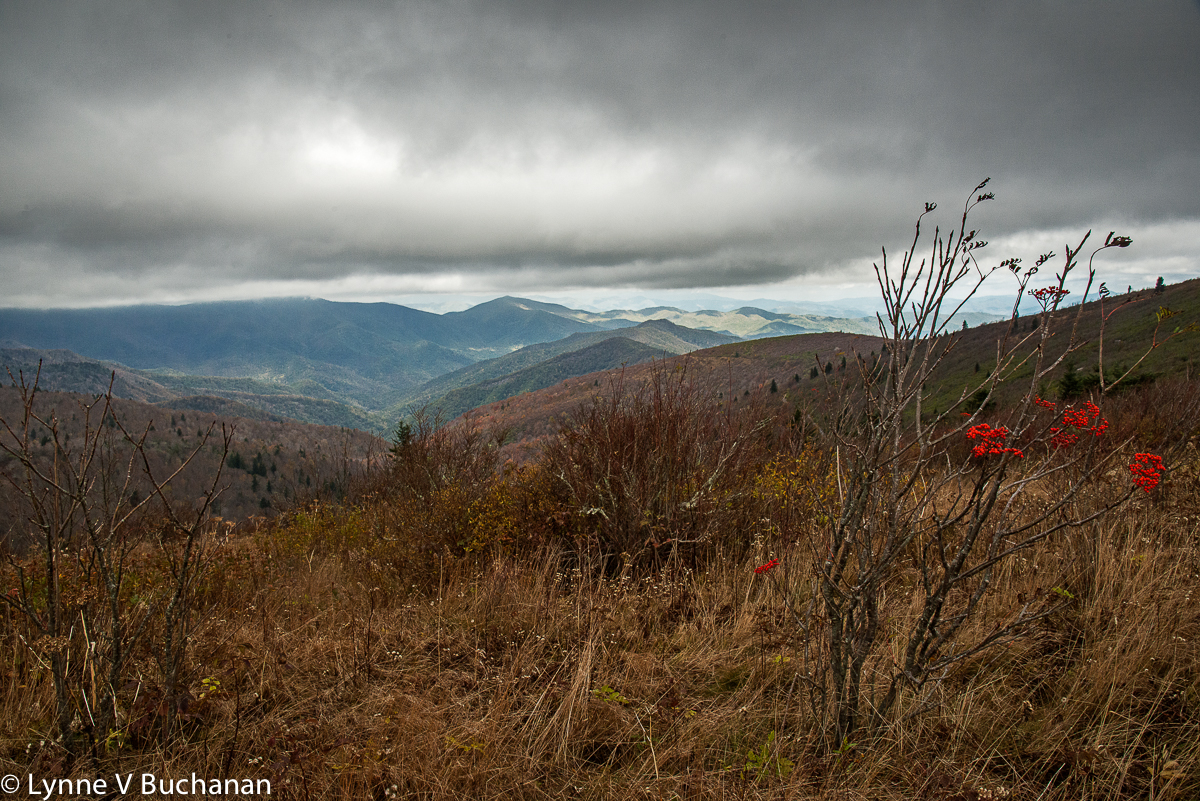 Tennent Mountain Trail, Final Fall Berries