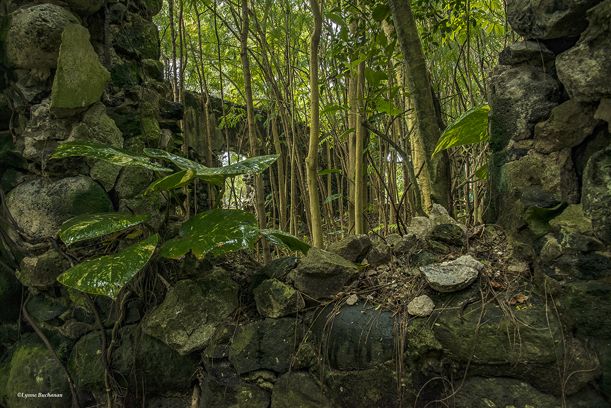 Molokai, East End Ruins with a Forest Inside