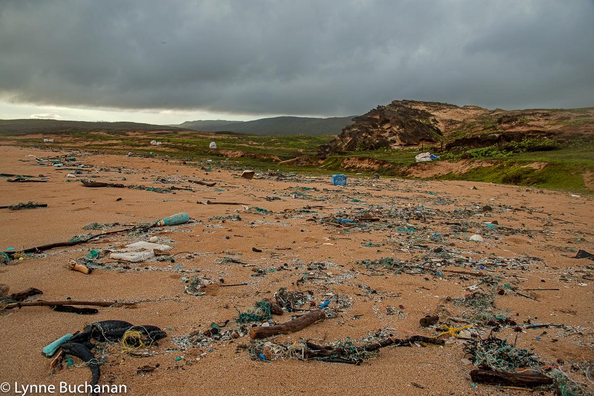 Trash-Littered Beach, Mo'Omomi Beach