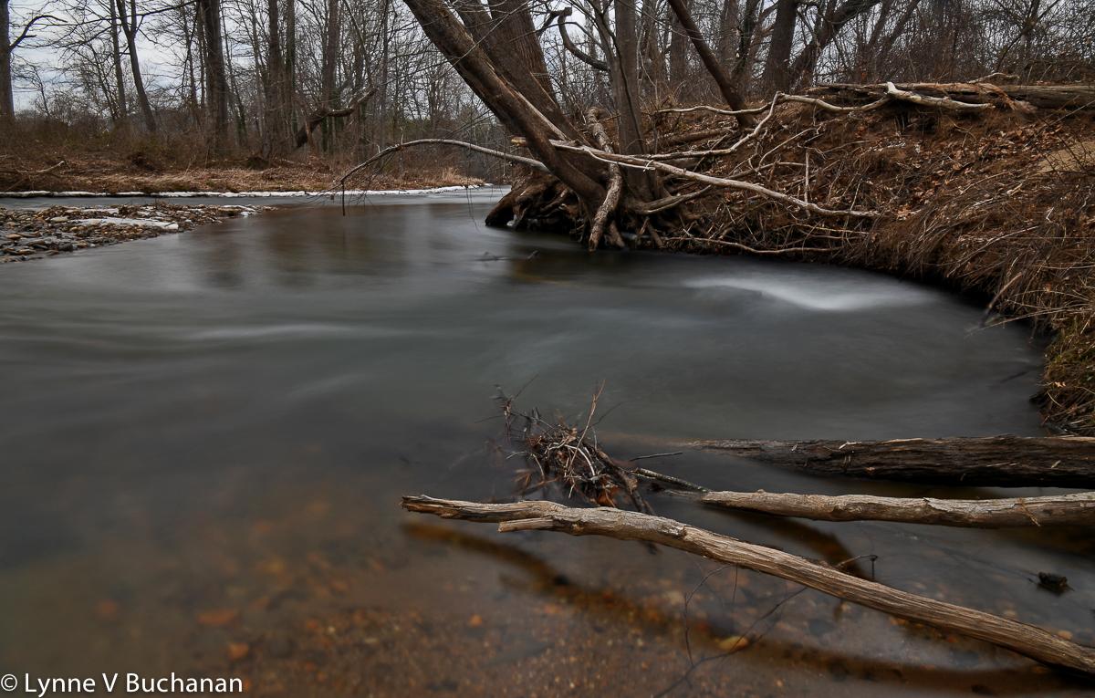 Suwannanoa River with Fallen Branches