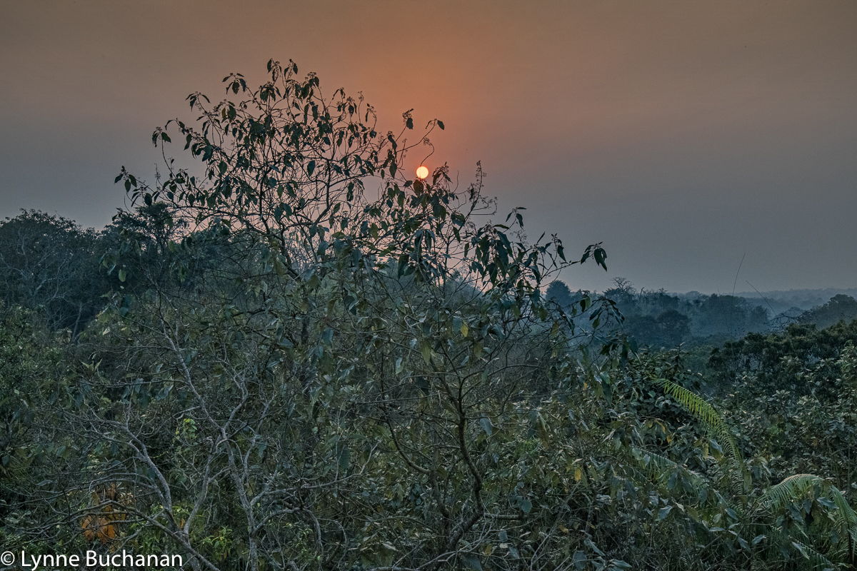 Satchori Forest Sunset