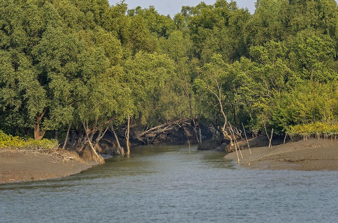 Mangrove Tunnel, the Sundarbans