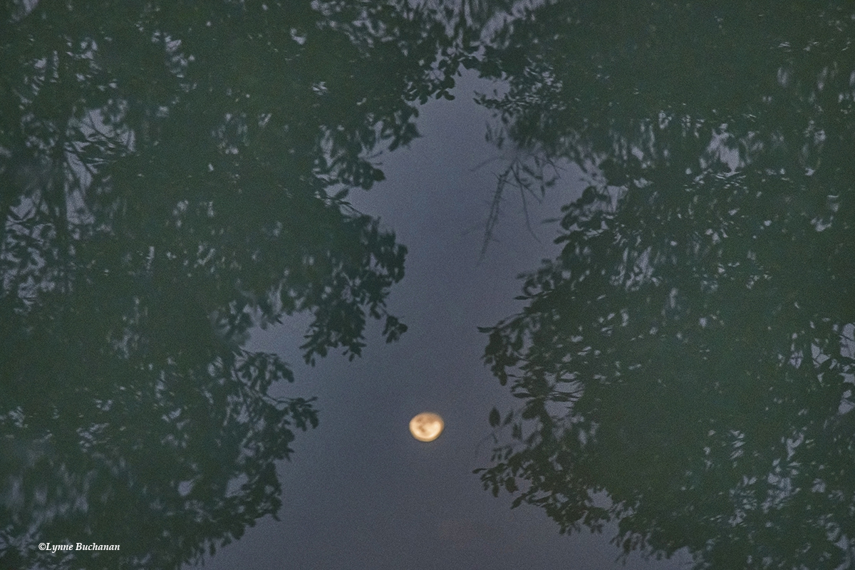 Sundarban Moon Rise in the Water