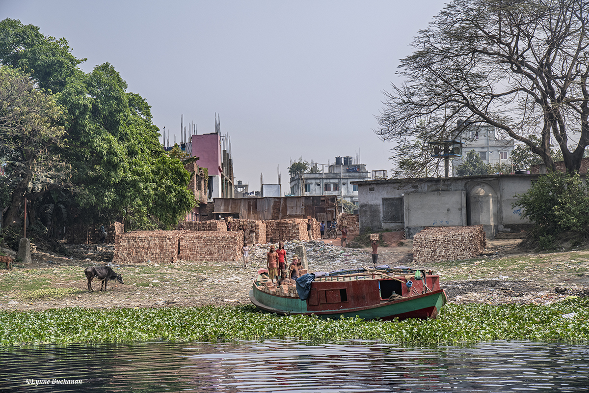 Brick Industry and Cow on the Buriganga River