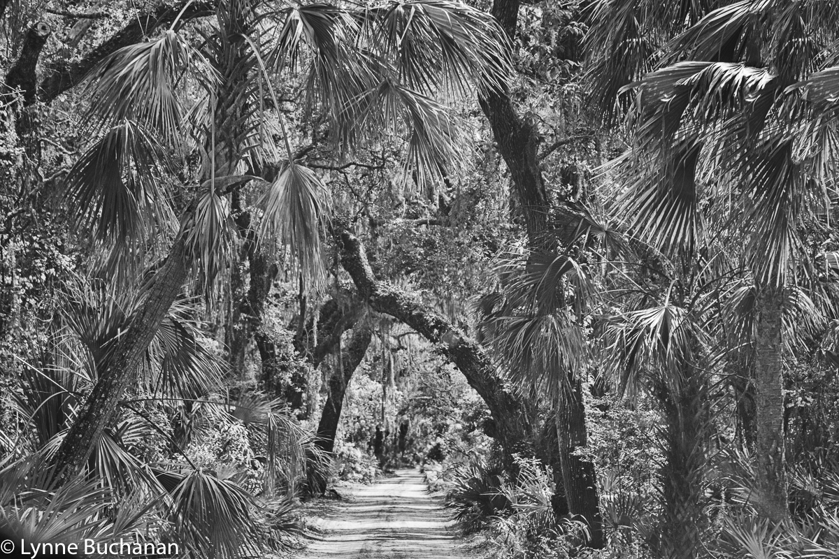The Road Through Cumberland Island