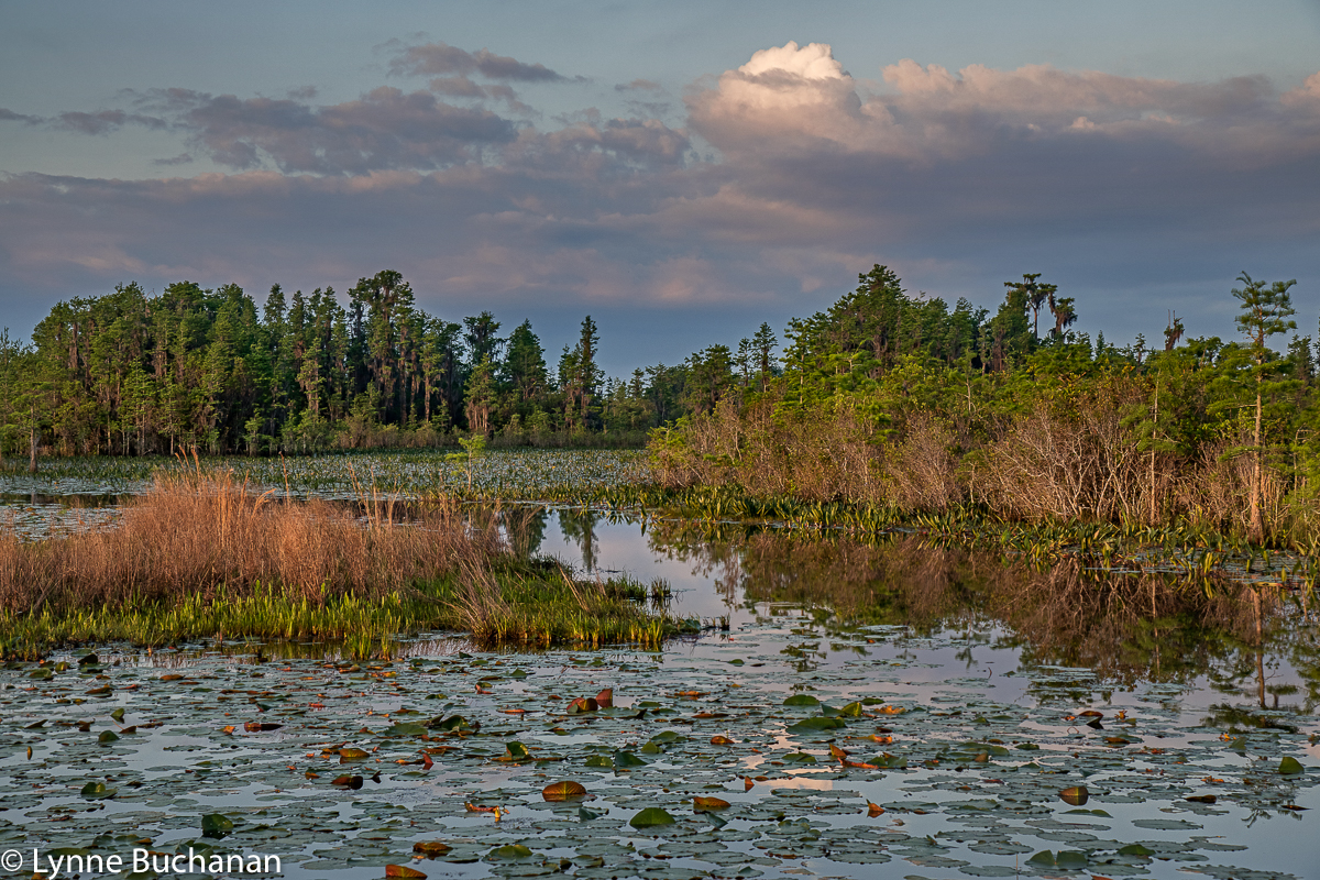 Okefenokee Swamp Layers of Life