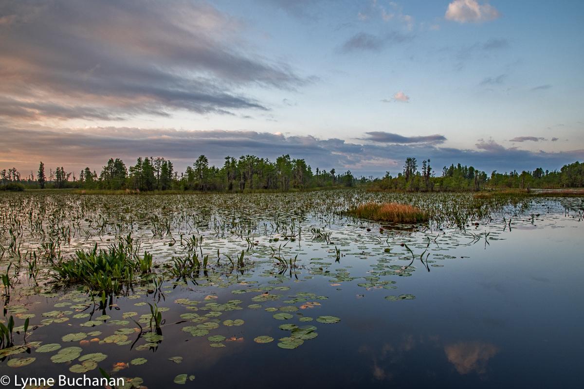 Okefenokee Swamp Diagonals