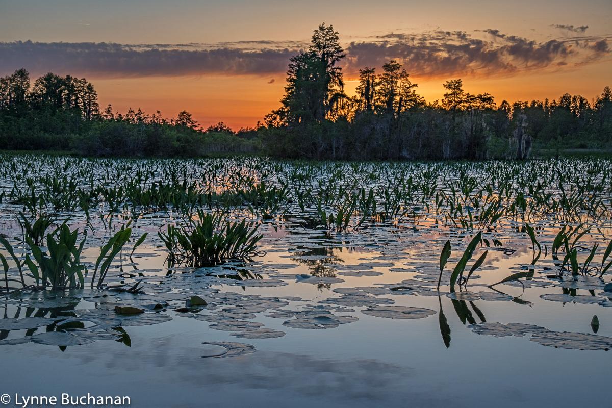 Okefenokee Swamp Last Light2119.jpg