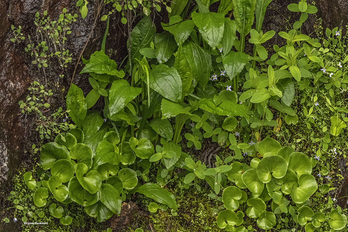 Vertical Bog with Grass of Parnassus