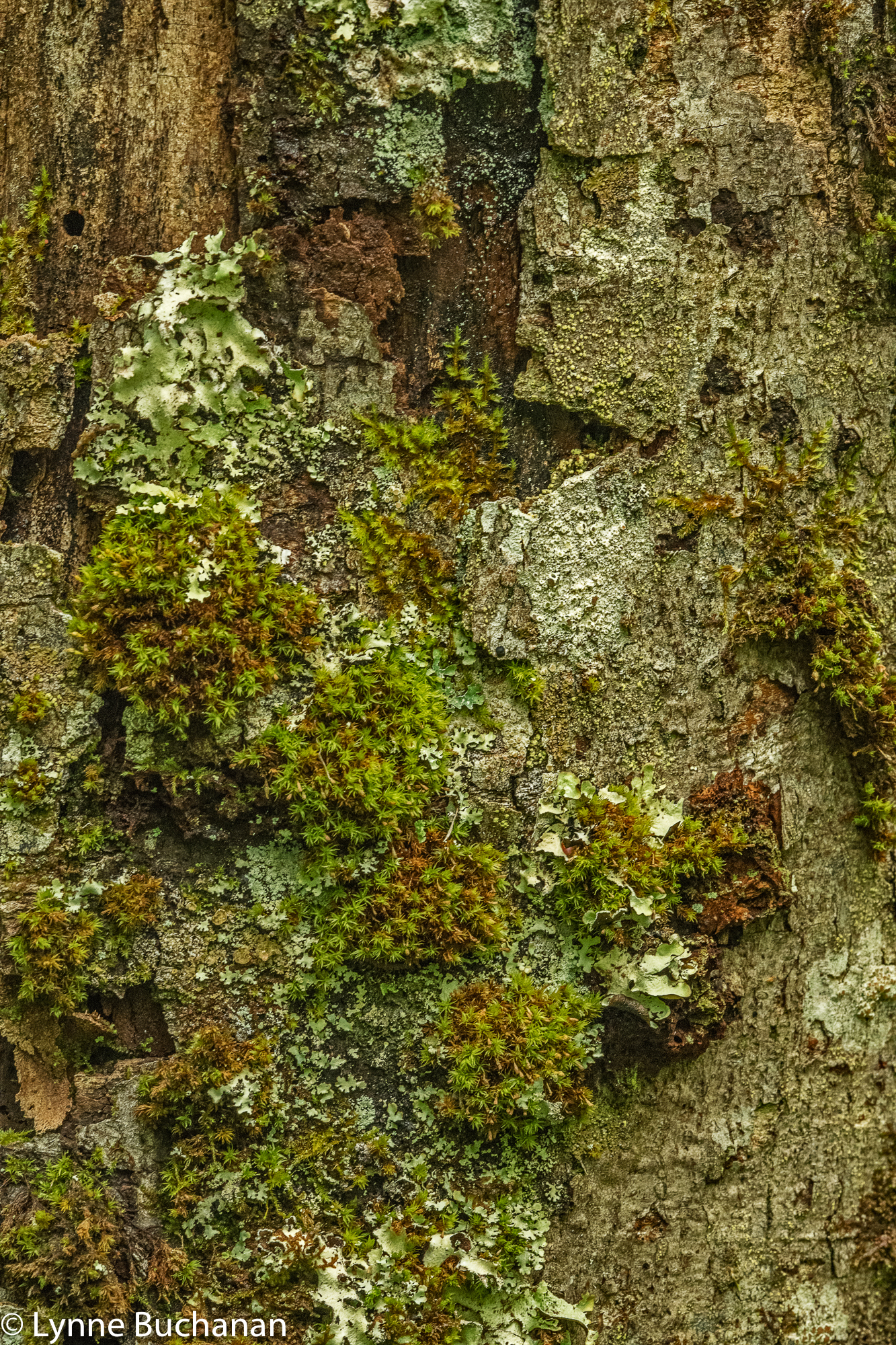 Bark with Lichen and Moss3211.jpg