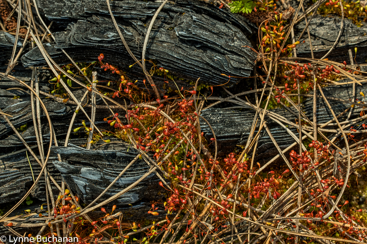 Moody Forest-Burned Log Still Life