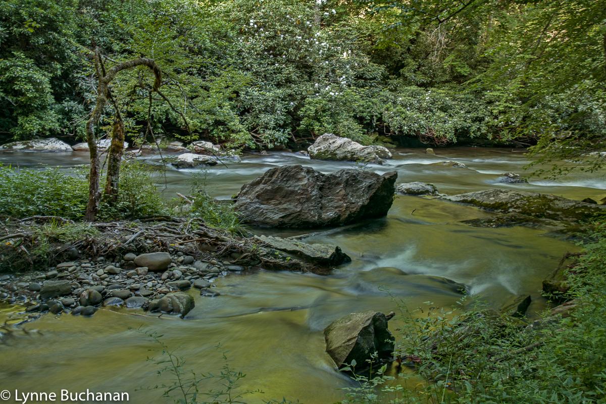 Deep Creek Riparian Landscape