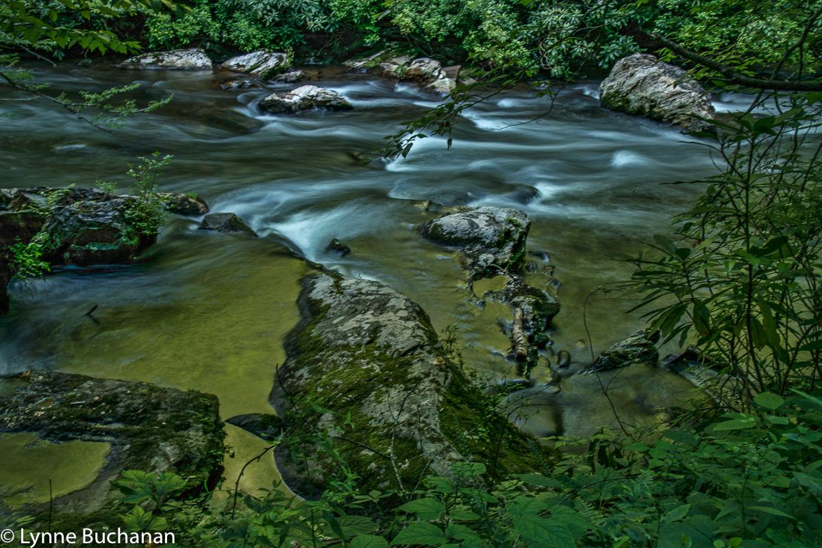 Deep Creek Through the Foliage at Dusk