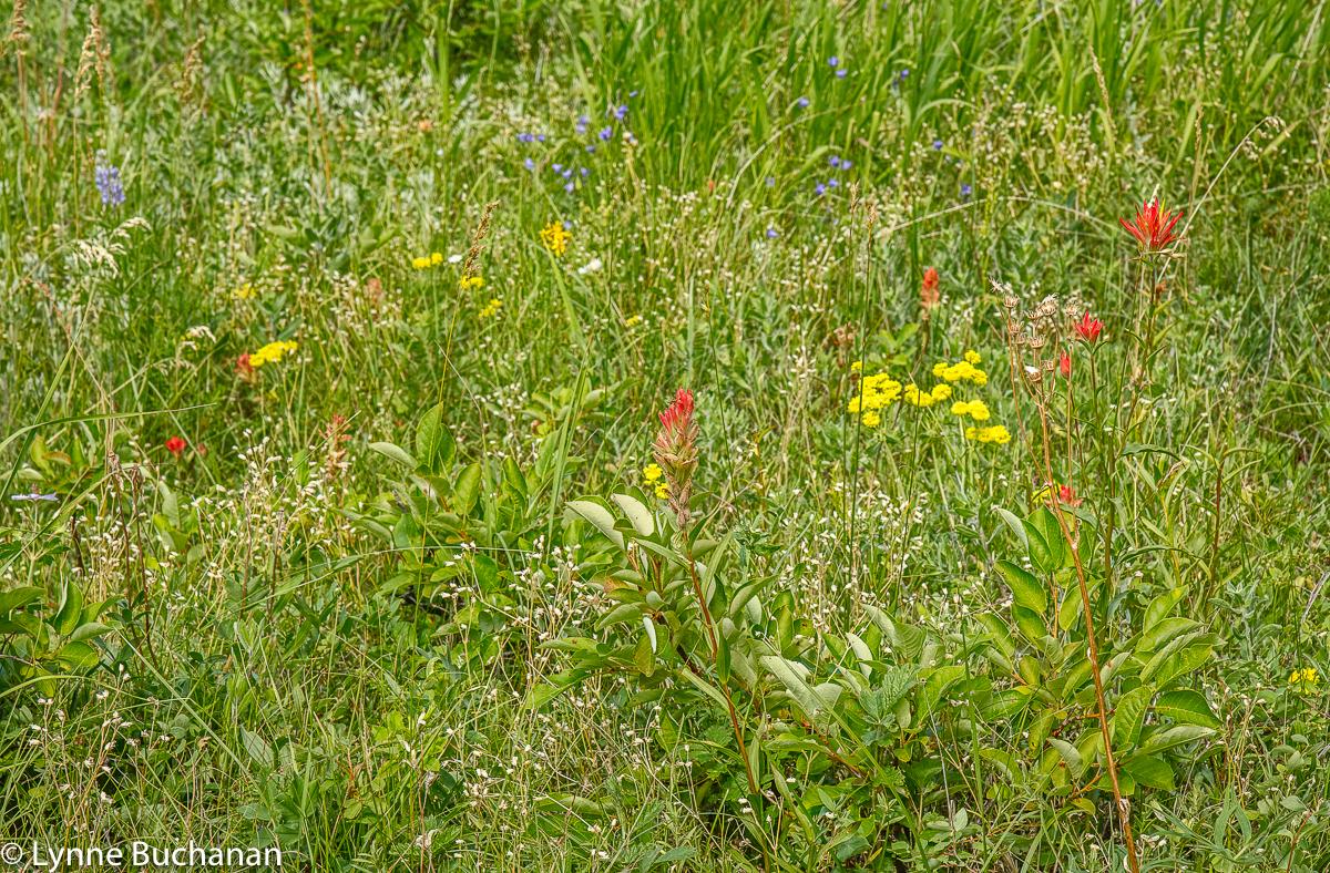 Eldorado Field of Wildflowers, Detail