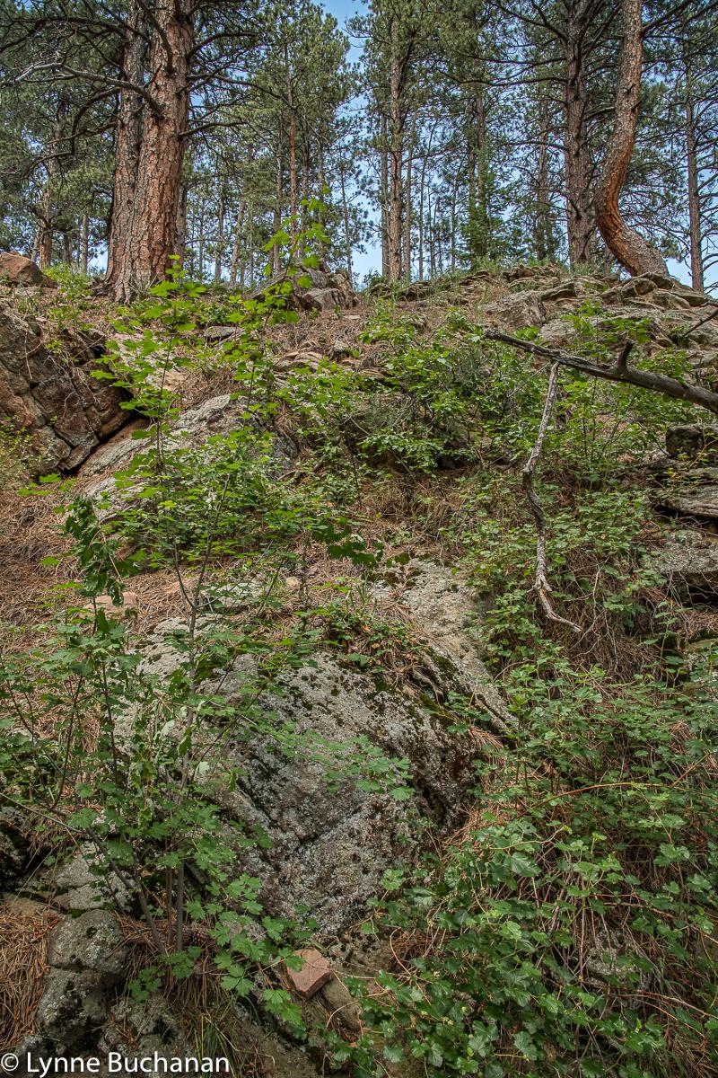 Eldorado Canyon Goshawk Ridge Trail Ruins