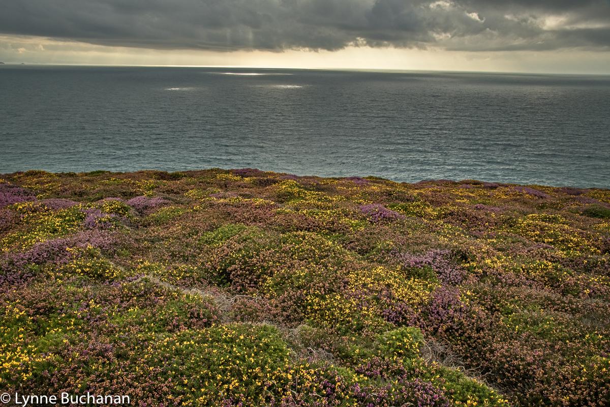St. Agnes Head Heath and Coast with Spotlights on the Sea