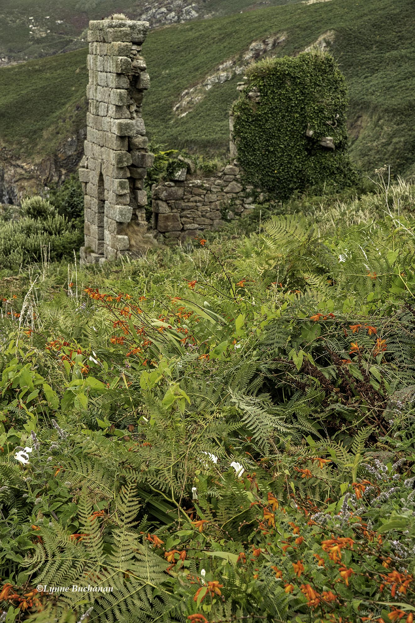Engine House Remains at Gurnard's Head Mine with Wildflowers