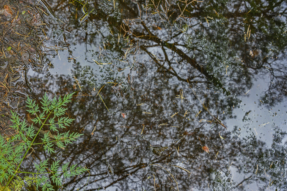 Natural Biofilm and Reflections, Wigry National Park