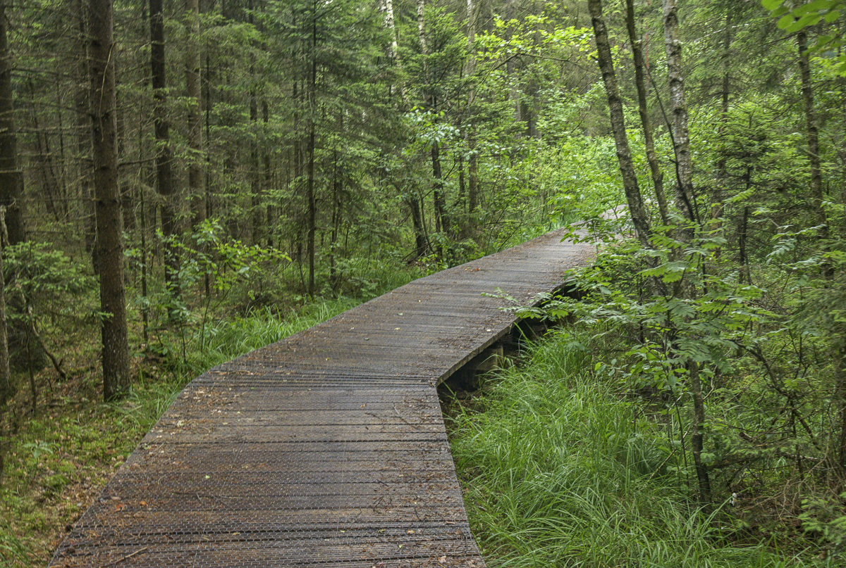 Path Through a Primeval Forest and Wolf Habitat, Wigry National Park