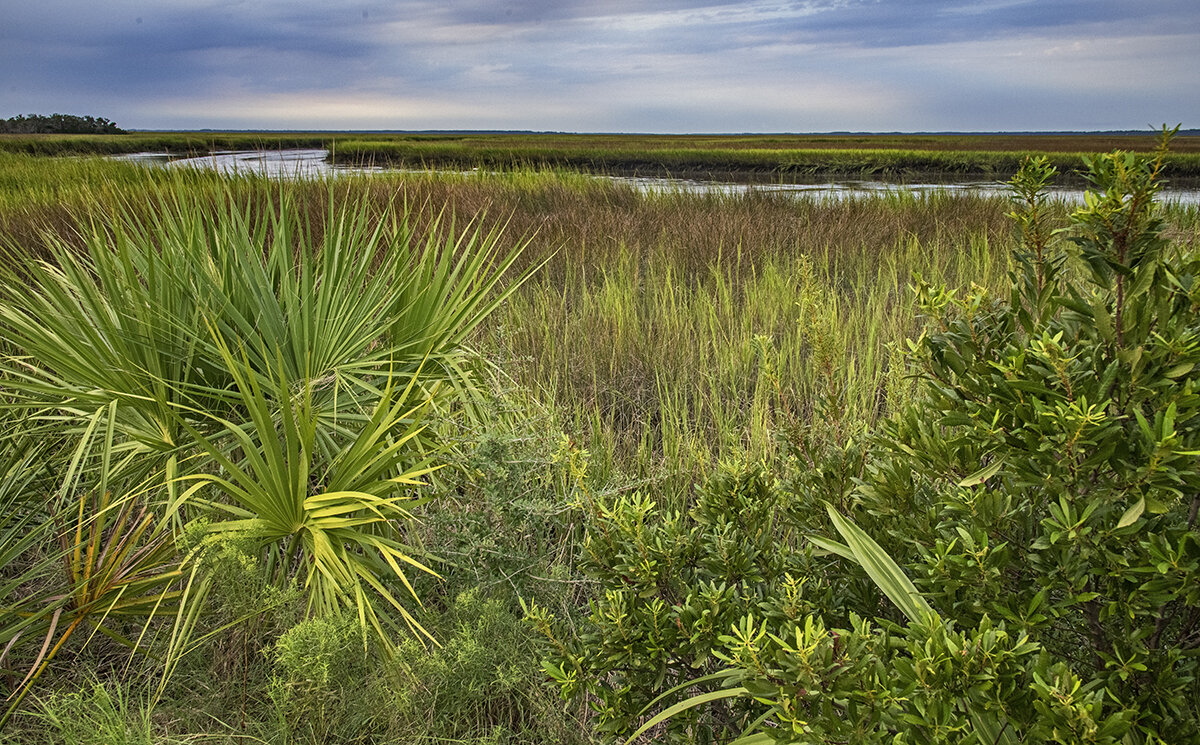 Palmettos and Grasses in the Salt Marsh by the Ogeechee River