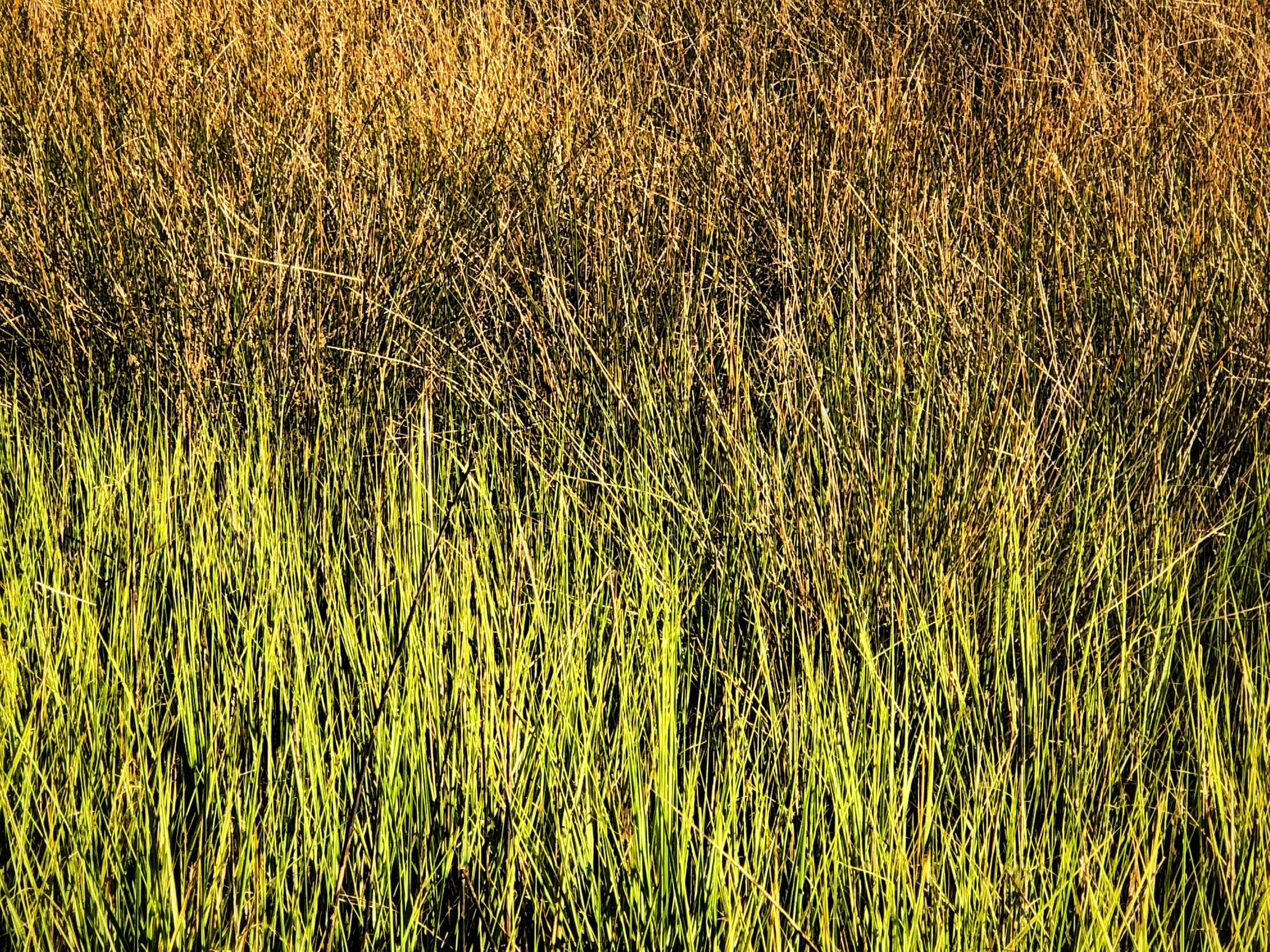 Close up of the Grasses