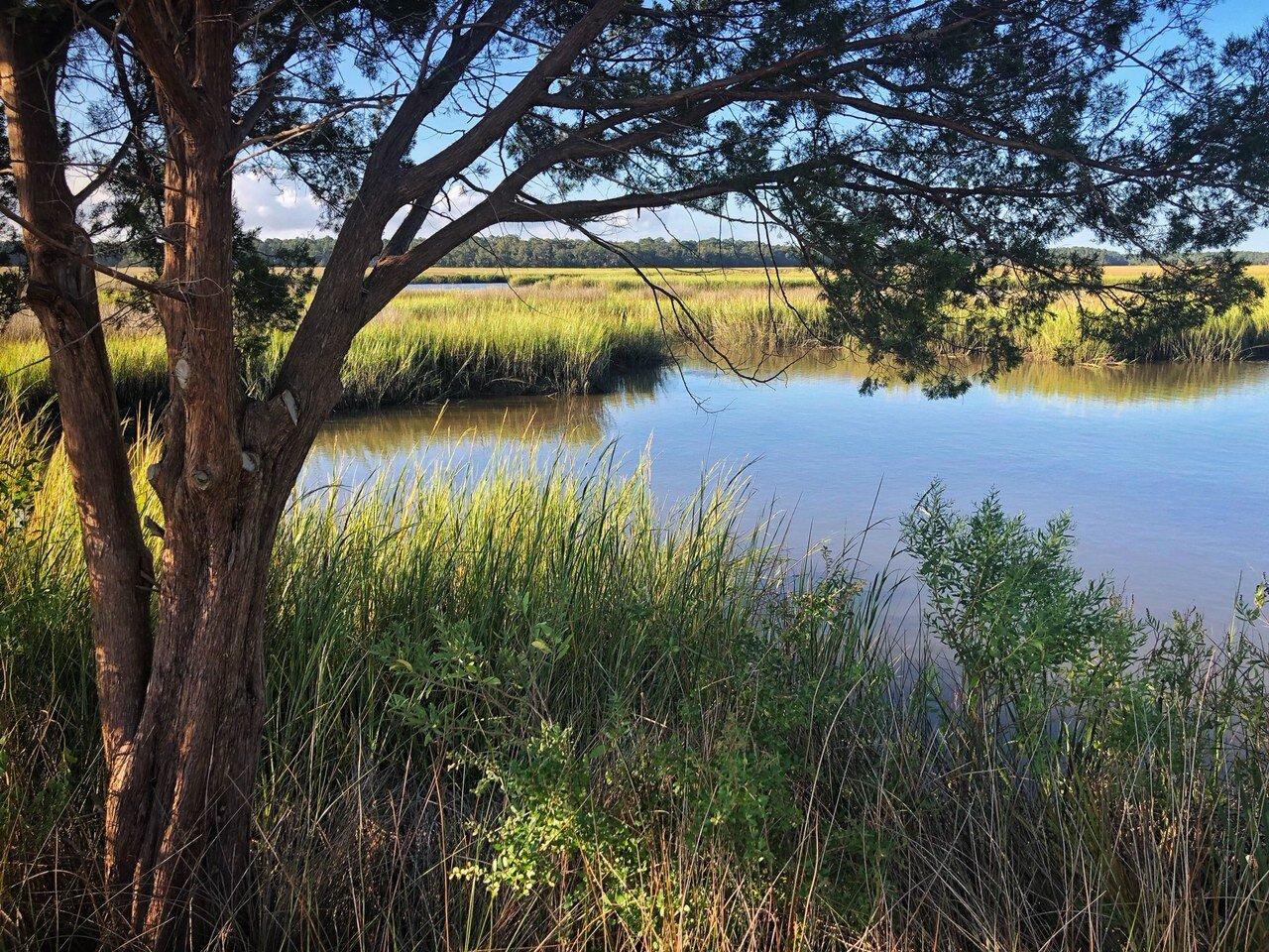 A Respite of Shade Along the Marsh