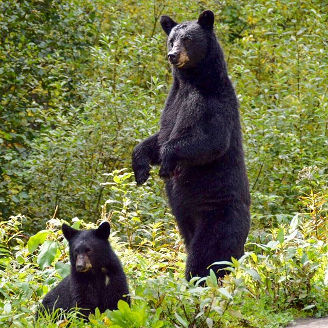 We saw a lot of wildlife in Northern BC and the Yukon, not so much in Alaska
