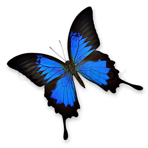 blue butterfly.jpeg