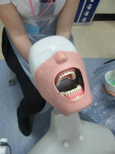 Teeth in the dentistry labs