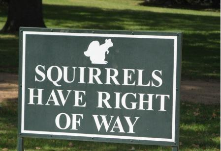 Squirrels Have Right of Way