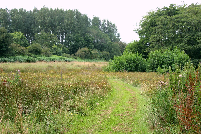 meadow walk.jpg