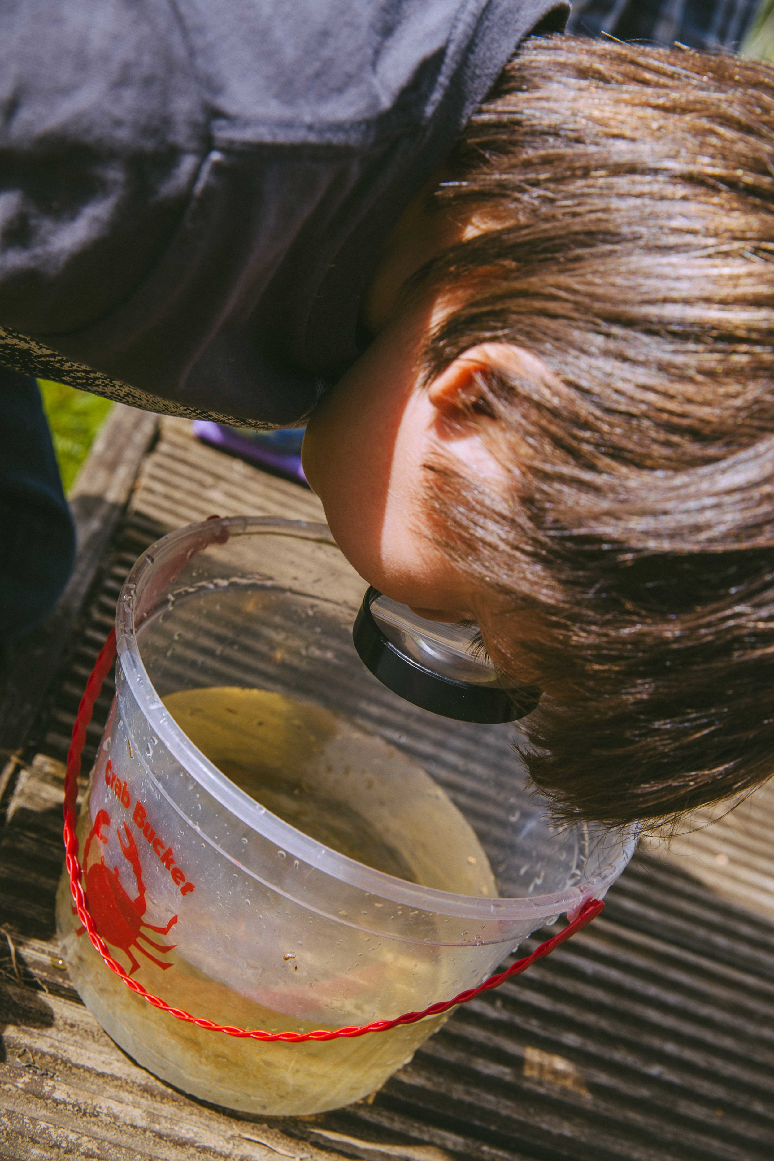 Boy looking through a magnifying glass at pond dipping finds in a bucket