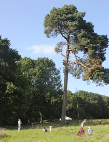 Beautiful summers day for a tree climb - this is the secret to the awesome tree swing!