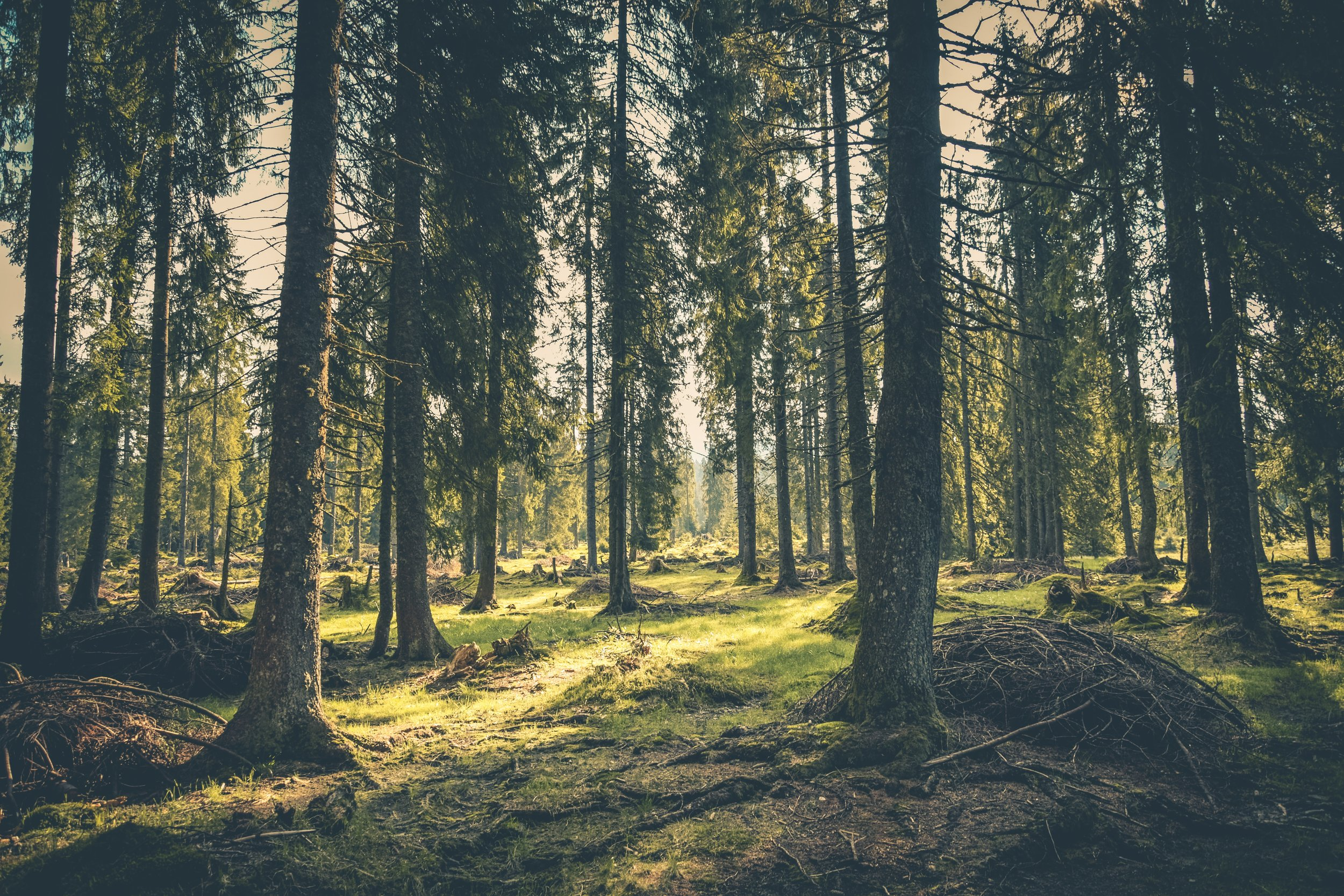 Explore Norfolk's woodlands including Thetford Forest